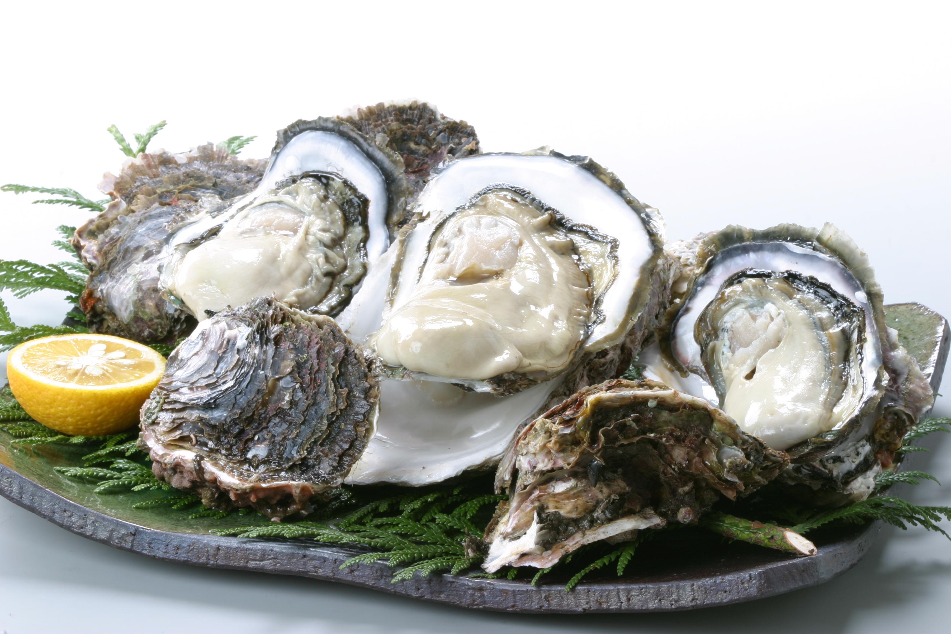 隠岐の岩牡蠣